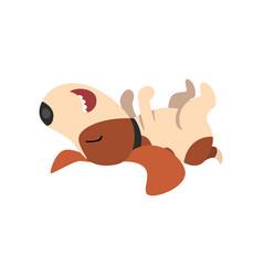 beagle dog sleeping on his back cute funny animal vector image