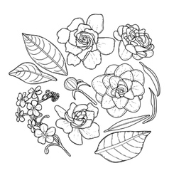 Collection of graphic flowers vector