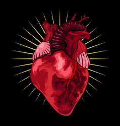 Human heart on black background in vector