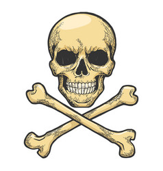 jolly roger sketch engraving vector image