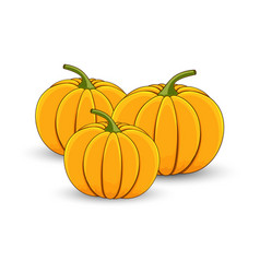 several pumpkins on a white isolated background vector image
