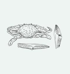 Vintage crab drawing vector