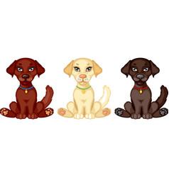 puppy labrador vector image vector image