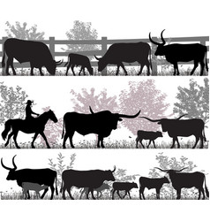 texas longhorn cattle vector image vector image