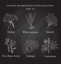vintage collection of hand drawn medical herbs and vector image vector image