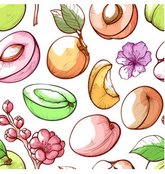 Apricot fruit and flowers hand drawn vector