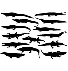 collection of silhouettes of different species vector image