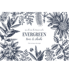 Evergreen plants collection vector