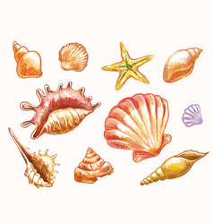 Seashells in sketch watercolor style isolated vector