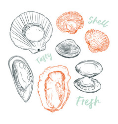 Shell hand draw sketch seafood set vector