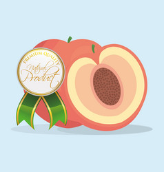 Apricot natural product premium quality vector