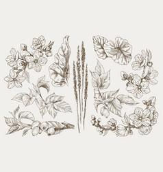Big set monochrome vintage flowers vector