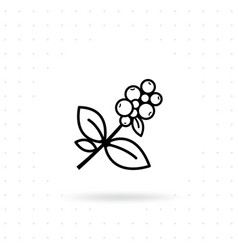 coffee plant icon vector image