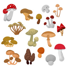Fresh autumn mushrooms and toadstools cartoon vector
