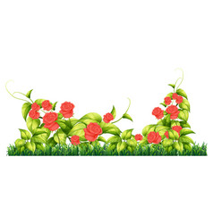 Isolated rose plant for decore vector