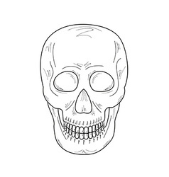 sketch of the skull vector image