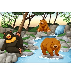 Three bears living by the waterfall vector