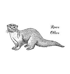 wild river otter forest animal vintage vector image