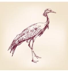 Japanese crane hand drawn llustration realistic vector image vector image