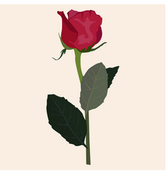 Blooming red rose flat isolated vector