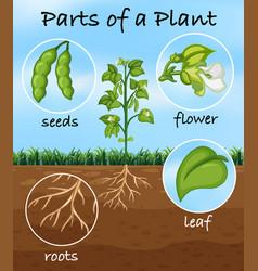 Parts a plant vector
