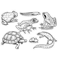 reptiles and amphibians set pet and tropical vector image