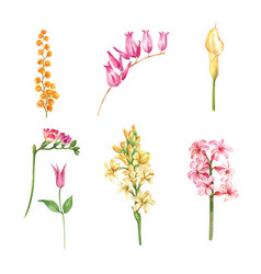 Set watercolor flower bud and foliage vector