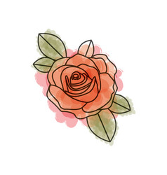 watercolor drawing of flowered red rose with vector image vector image