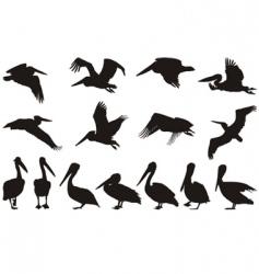 pelican silhouettes vector image vector image