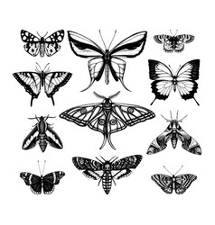 collection high detailed insects sketches hand vector image