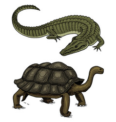 crocodile and turtle reptiles and amphibians pet vector image
