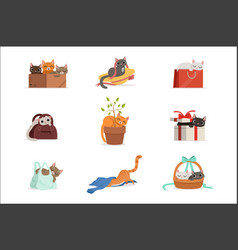 cute different cats having rest in their favorite vector image