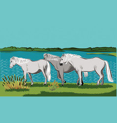 Horses walking vector