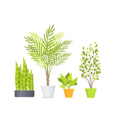 Indoor floor plants in pots isolated vector