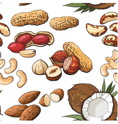 Seamless pattern of various nuts on white vector