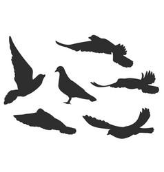 Set bird pigeon flies black silhouettes vector