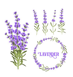 Set of lavender flowers elements vector