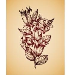 Vintage flower Hand drawn retro sketch campanula vector image
