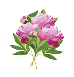 Bouquet of pink peonies flat isolated vector