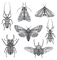 Collection hand drawn insects moth vector