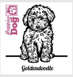 Goldendoodle puppy sitting drawing hand vector