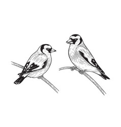 Hand drawn goldfinches sitting on branches vector