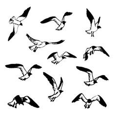 sketch of birds vector image