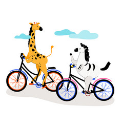 zebra and giraffe cycling - modern flat design vector image