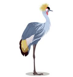 grey crowned crane cartoon vector image