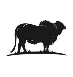 angus cow logo vector image