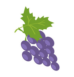 Brunch lilac grape color vector