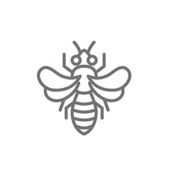 honey bee beekeeping line icon vector image