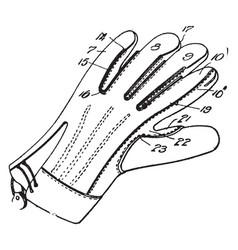 working glove vintage vector image