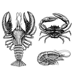 crustaceans shrimp lobster or crayfish crab vector image